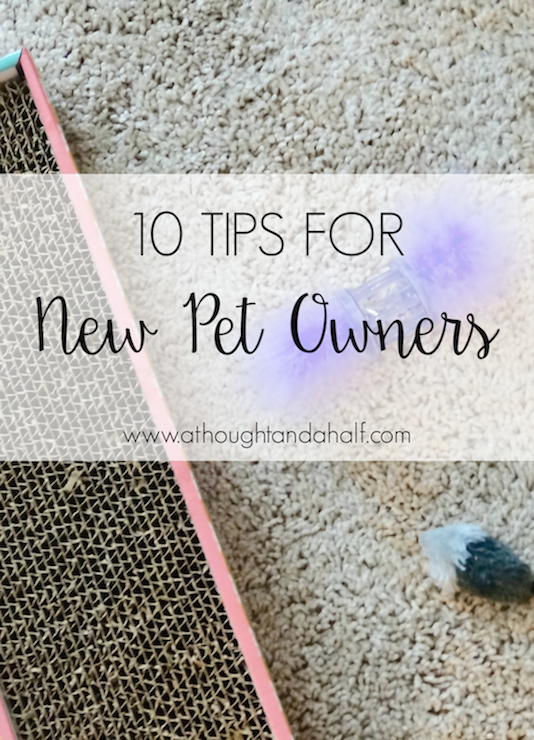 10 tips for new pet owners | a thought and a half blog